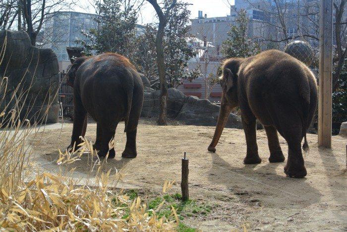 zoo Creation Museum 011