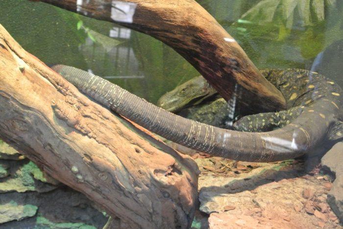 zoo Creation Museum 024