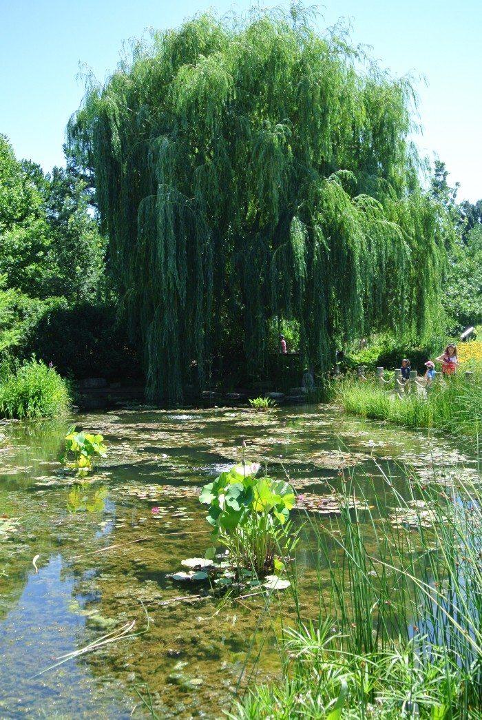 sfz camp and morton arboretum 022