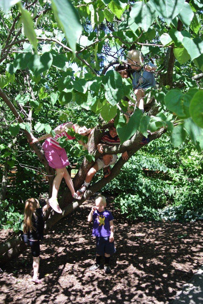 sfz camp and morton arboretum 027