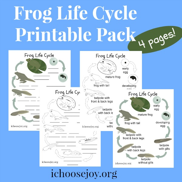 Frog Life Cycle printable pack