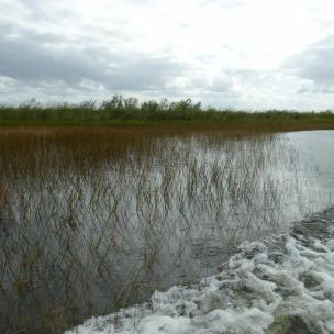 Sumpfgraslandschaft der Everglades