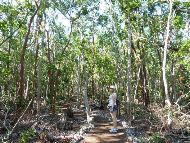 Wanderweg im John Pennekamp Coral Reef State Park