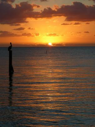 Sonnenaufgang mit Pelikan auf Islamorada