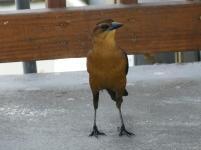 Vogel auf dem Pier