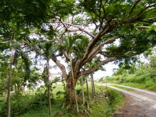 Tropische Bäume-1200x900