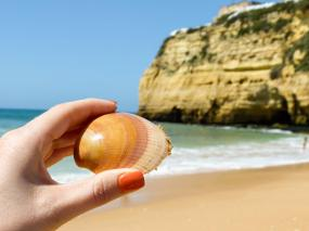 Algarve Carvoeiro Strand Muschel