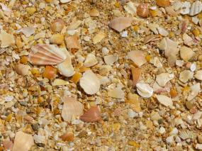 Algarve Carvoeiro Strand Muscheln