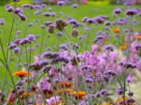 Fulda Schlossgarten Blume
