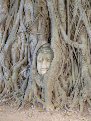 Thailand Ayutthaya Tempelruinen Buddha