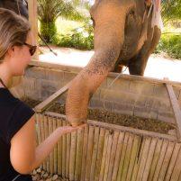 Thailand Khao Sok Nationalpark Elefanten Win Elephant Camp Fütterung
