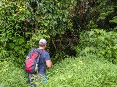 Thailand Khao Sok Nationalpark Dschungel Dschungelpfad Dickicht