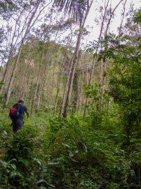 Thailand Khao Sok Nationalpark Dschungel Anurak Community Lodge Dschungelpfad Wildnis