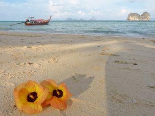 Thailand Koh Ngai Koh Hai Insel Andamanensee Inselparadies Strand Meer Blumen