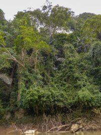 Thailand Khao Sok Nationalpark Dschungel Kajaktour Kajak Paddeln Fluss Vegatation