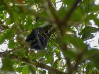 Thailand Khao Sok Nationalpark Dschungel Kajaktour Kajak Paddeln Fluss Schlange Mangroven Nachtbaumotter