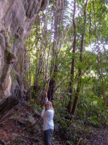 Thailand Khao Sok Nationalpark Dschungel Anurak Community Lodge Dschungepfad