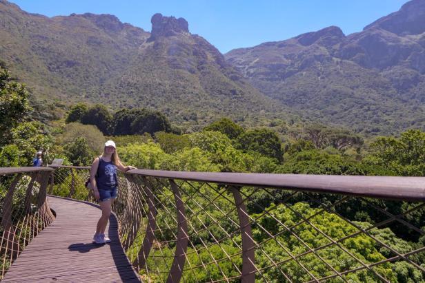 Südafrika South Africa Kapstadt Cape Town Kirstenbosch Botanical Garden Botanischer Garten Baumwipfelpfad Canopy Walk Tafelberg Table Mountain