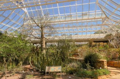 Südafrika South Africa Kapstadt Cape Town Kirstenbosch Botanical Garden Botanischer Garten Wüstenhaus Gartenhaus