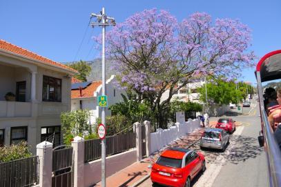 Südafrika Kapstadt Cape Town City Sightseeing Hop on Hop Off Bus Doppeldeckerbus Bustour Vorort Jacaranda