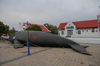 Südafrika South Africa Hermanus Kap Stadt Marktplatz Wal