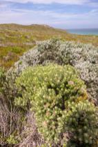 Südafrika South Africa Kap De Hoop Nature Reserve Naturreservat Fynbos