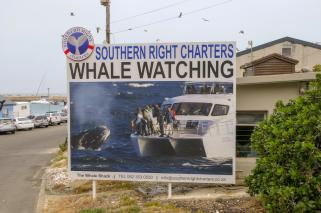 Südafrika South Africa Hermanus Kap Walker Bay Whale Watching Walbeobachtung Southern Right Charters Whale Wal