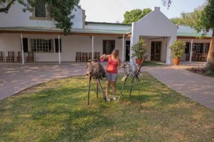 Südafrika South Africa Kleine Karoo Oudtshoorn Schoemanshoek Cango Ostrich Show Farm Vogel Strauß Straußenfarm Federpalast