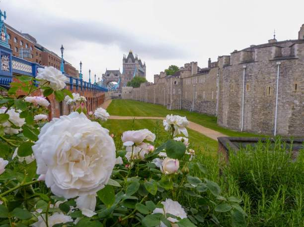 Großbritannien England UK London Tower of London Burg Befestigungsanlage Mauer Rosen