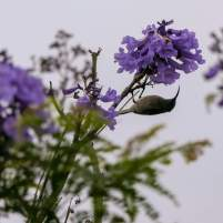 Afrika Südafrika South Africa Garden Route Knysna Eastern Heads Vogel Sunbird