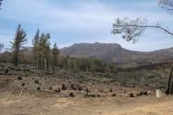 Afrika Südafrika South Africa Montagu Pass Outeniqua Berge Buschfeuer