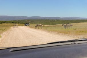 Südafrika South Africa Garden Route Ostkap Addo Elephant Nationalpark Safari Tiere Zebras Straße
