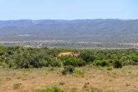 Südafrika South Africa Garden Route Ostkap Addo Elephant Nationalpark Safari Tiere Elefant