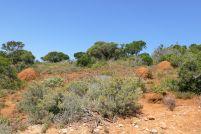 Südafrika South Africa Garden Route Ostkap Addo Elephant Nationalpark Safari Tiere rote Erde