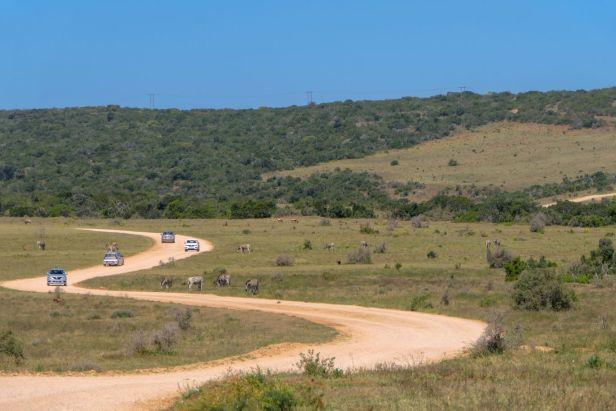 Südafrika South Africa Garden Route Ostkap Addo Elephant Nationalpark Safari Tiere Straße