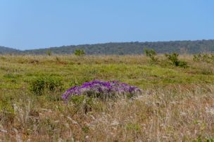 Südafrika South Africa Garden Route Ostkap Addo Elephant Nationalpark Safari Blumen