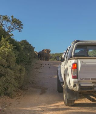 Südafrika South Africa Garden Route Ostkap Addo Elephant Nationalpark Safari Elefanten Straße