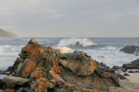Südafrika South Africa Garden Route Kap Tsitsikamma Nationalpark Storms River Restcamp Meer Wellen