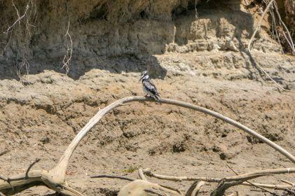 Südafrika South Africa Garden Route Ostkap Sibuya Game Reserve Fluss Kariega Vogelsafari Vogel Eisvogel