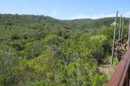 Südafrika South Africa Garden Route Ostkap Sibuya Game Reserve Wildreservat Bush Lodge Busch Ausblick
