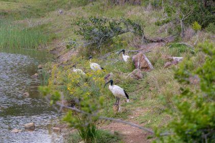 Südafrika South Africa Garden Route Ostkap Sibuya Game Reserve Wildreservat Safari Game Drive Vögel