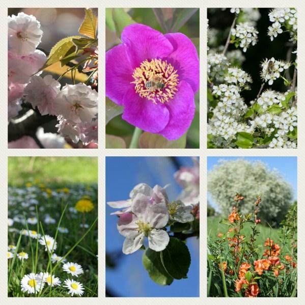 Blumen Frühling Natur blühen