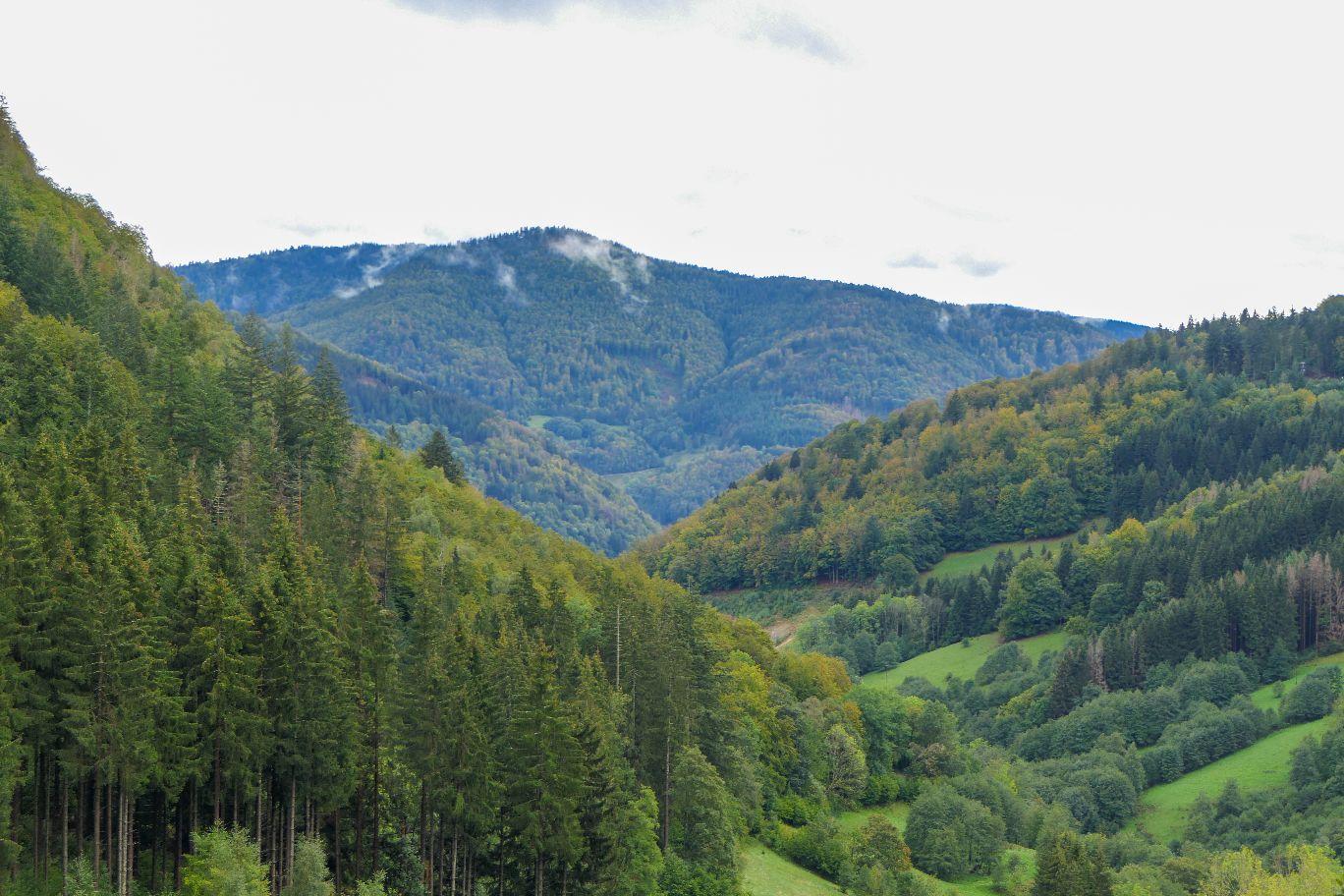 Deutschland Schwarzwald Hochschwarzwald Todtnau Natur Wald Berge Täler