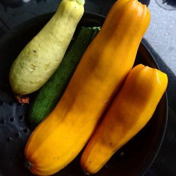 Für diese Pracht aus dem Garten unserer Gastgeber von gestern will ich heute ein pfiffiges Rezept finden. Werde ich!
