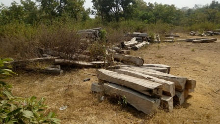 Abandoned dried up rosewood logs in Mopa Moro, Kogi State