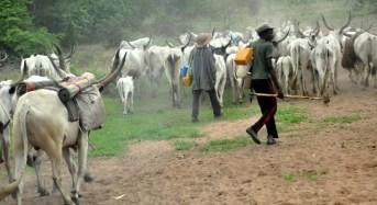Understanding farmers-herdsmen conflict and the way forward
