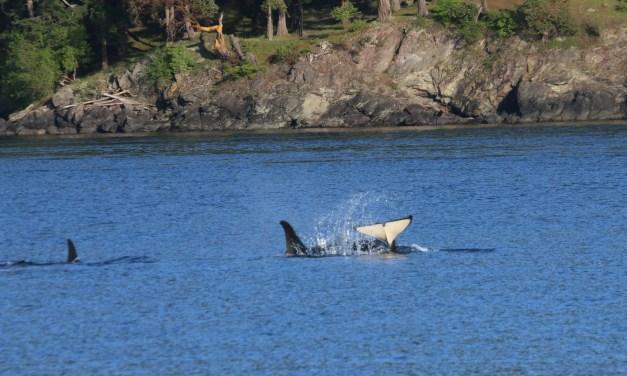 Une journée sur Orcas Island