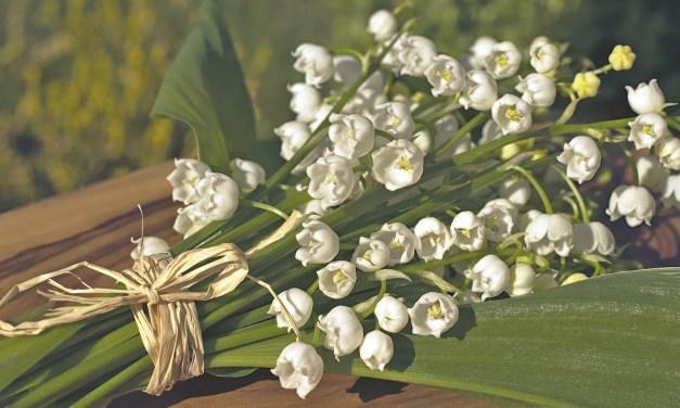 Le 1er mai et le muguet : Comment cette fleur est-elle devenue un symbole de chance et de bonheur dans le folklore français ?