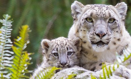 Woodland Park Zoo : un tour du monde de la biodiversité