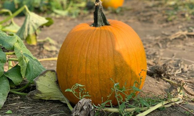 Activité familiale : Pumpkin patch près de Snohomish